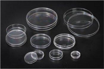 Placi culturi celulare